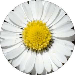 White Daisy Art   Fridge Magnet   Fibreglass reinforced plastic
